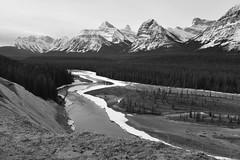 Goat Lookout (Hello, It's Me) Tags: mountain jasper mt fryatt dragon christie brussels peak athabasca river