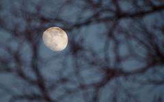 IMGP7412 (PahaKoz) Tags: весна природа сад spring nature garden луна ветки moon branches вечер закат evening even eventide sunset