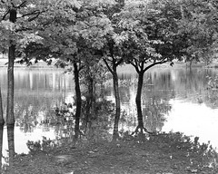 Lake Park after the rain (woody lauland) Tags: austin texas austintx atx tx muelleraustin rmma lake park nature landscape trees water reflections blackandwhite monochrome