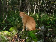 Photographic Interuptus (jmunt) Tags: stewartjcat cat moss nature