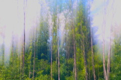 Magic wood (dibi54) Tags: bosco alberi mosso verde montagna