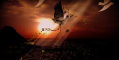 Everybody`s heard about the Bird.........BaBaBa Umma Mow Mow!!!!!!!!!!!!!!!!!!!! (umshlanga.barbosa) Tags: