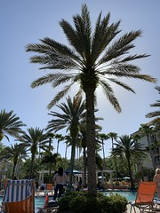 2019-3-28 Sunshine and palm tree