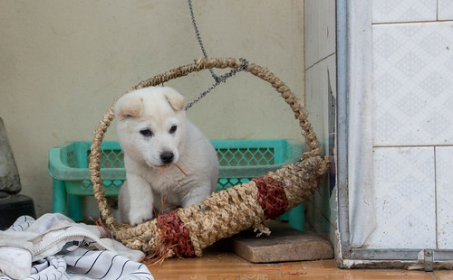 Little white puppy in a Basket