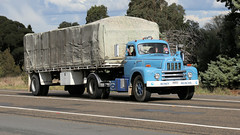 Haulin' Into Yass (6/6) (Jungle Jack Movements (ferroequinologist)) Tags: diamont kenworth k125 international inter harvester rd 200 golden fleece 61 kw kenny ih ken highway hauling haulin hume sydney 2019 yass classic historic vintage veteran hcvca vehicle run hp horsepower big rig haul haulage freight cabover trucker drive transport delivery bulk lorry hgv wagon nose semi trailer deliver cargo interstate articulated load freighter ship move roll motor engine power teamster tractor prime mover diesel injected driver cab wheel money muncher
