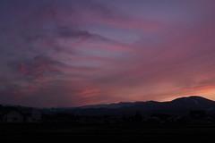 Spring Pink (jasohill) Tags: spring color love hachimantai nature photography mountains city tohoku 2019 japan clouds