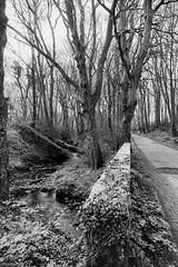 morning walk (billdsym) Tags: annanscotland walk road trees burn