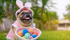 **COMPETITION TIME** In the spirit of Easter, we are offering one lucky customer the chance to win 1 Easter egg, along with some tasty doggy treats!🐶💝 To be in with the chance of winning, simply like our page, share this photo and post a pi (pawpaddogs) Tags: dogs