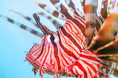 20181117-DSC_6251.jpg (d3_plus) Tags: drive fish marinesports apnea 晴れ fishingport 海岸 景色 185mm watersports sky 風景 ニコン 素潜り ウォータープルーフケース 静岡 nikon1j4 漁港 海 地形 scenery 息こらえ潜水 ズーム nikon1 waterproofcase landscape nature izu sea 伊豆半島 j4 自然 skindiving wpn3 japan 静岡県 50mmf18 50mm nikonwpn3 水中 スキンダイビング 魚 生物 peninsula ニコン1 伊豆 185mmf18 fine snorkeling 1nikkor185mmf18 port beach ビーチ animal underwater diving eastizu 空 shizuoka 日本 東伊豆 マリンスポーツ シュノーケリング fineday