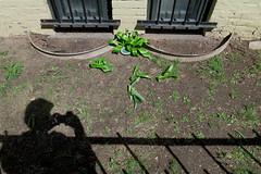 Kingston (Paul Comstock) Tags: 16apr2019 2019 april tuesday newyork kingston kingstonny s120 canons120 canon spring sunny sunshine green