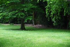 京都・元離宮二条城 ∣ Nijo Castle・Kyoto (Iyhon Chiu) Tags: 日本 京都市 京都 元離宮 二条城 nijo castle kyoto japan tree japanese