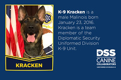 Meet K-9 Kracken (Diplomatic Security Service) Tags: departmentofstate canines dogs policedogs uniformedprotectiondivision