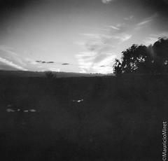 Holga-Acros-04-09.jpg (Mauricio Miret) Tags: holga acros100 ilfosol silverscan epsonv600 bw film blackandwhite