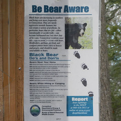 Be Bear Aware (blazer8696) Tags: american americanus animal bear birch black glen open pratt preserve rocks sanctuary space ursus ursusamericanus weantinoge brookfield connecticut unitedstates 2019 ct ecw obtusehill t2019 usa