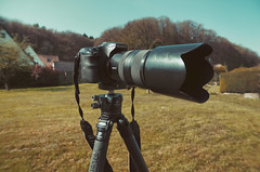 My new tripod for my A77II`s needs to be tested... (SurfacePics) Tags: sonyalpha77ii sonyalpha sony leofoto stativ rangerrf324c kugelkopf garten test garden outdoor april 2019 surfacepics objektiv tripod sal70300g gimmick gear equipment photographyequipment photography photo foto fotografie hobby sky himmel hobbyfotograf technic
