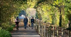 sjb-autumn-dogs.jpg (Stephen.Bingham) Tags: bristolandbathrailwaypath cycling walking path autumn dogs dogwalking bike ccbysa creativecommons attributionsharealike