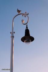 Farola y gaviota. (AviAntonio) Tags: fanal gavina llum lateral vespre atardecer luz minimalisme