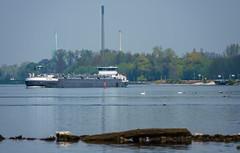 Frachter auf dem Rhein (KaAuenwasser) Tags: frachter schiff schiffe boot rhein strom fluss verkehr handelsverkehr wasser landschaft buhnen industrie schornstein wald bäume ufer karlsruhe