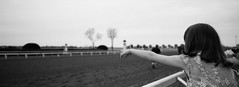 Girl at the Races.  Keeneland Race Track, Lexington, Kentucky. (bclook) Tags: keeneland lexingtonky xpan panoramic acros100 bwfp istillshootfilm monochrome