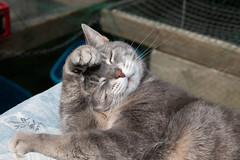 190417_035 Feng Shui Cat.jpg (MiFleur...Thanks for visiting!) Tags: cat animals mignonne pet animaux chat animal