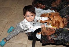 El amigo de los animales. (jagar41_ Juan Antonio) Tags: niños niño perros perro persona personas amigo amigos hijos nieto