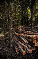 2019-04-18_06-52-35 (catha.li) Tags: felling thinning wood lgg4 sweden naturewatcher soe