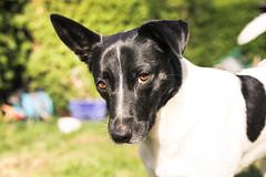 Felix (martinasteigerstorfer) Tags: dog nature garden puppy portrait vienna austria hund österreich wien garten natur dogportrait