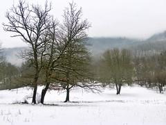Mazuet, December snow (kcorrick) Tags: tarentaise alps winter france isere trees snow landscape