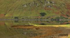 Drying Out (RoystonVasey) Tags: canon eos m 1855mm stm zoom eire republic ireland galway killary harbour fjord sea reflection mirror calm leenaun leenane