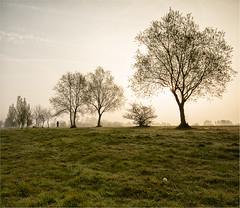 Dog Walk at Golden Hour (Perrier Pictures (A/c 2)) Tags: berkshire dintonpastures mist dim light dog walk