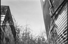corrugated metal storage bin, abandoned inustrial building, graffiti, River District, Asheville, NC, Nikon L35AF2, Kodak Tri-X 400, HC-110 developer, 4.1.19 (steve aimone) Tags: storagebin silo industrialarchitecture architecture corrugated metal graffiti urbanlandscape urbandecay riverdistrict asheville northcarolina nikonl35af2 kodaktrix400 hc110developer monochrome monochromatic blackandwhite 35mm 35mmfilm film