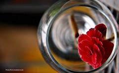 Jueves Santo (Aprehendiz-Ana Lía) Tags: 2019 flor juevessanto pascua color imagen rosa argentina flickr nikon amigos