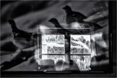 Inside the Mountain Shelter... (Ody on the mount) Tags: abstrakt anlässe berge dolomiten em5ii experimente fenster italien kunst menschen omd olympus reflexionen südtirol urlaub wanderung abstract art bw blackandwhite monochrome people sw schwarzweis window selvadivalgardena trentinoaltoadige
