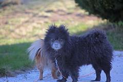 powder (Leifskandsen) Tags: dog nature black animal camera canon living leifskandsen skandsenimages scandinavia skandsen norway