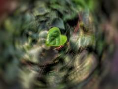Leaf (Andy Stones) Tags: icm longexposure shutterspeed leaf bushes rotation nature abstract naturephotography image imageof imagecapture photography photoof