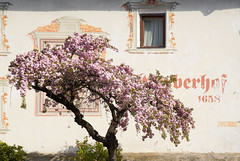 Gerberhof - Inzing, Tirol (Ernst_P.) Tags: aut baum blüte dorfbild dorfplatz frühling gerberhof inzing österreich pflanze tirol sigma art 24105mm f40 primavera spring