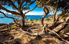 Il cuore selvatico della Sardegna (Mobphoto - Marco Bugliesi) Tags: sardegna ginepri capoceraso natura selvaggia natural paesaggio landscape mobphoto paradiso naturale