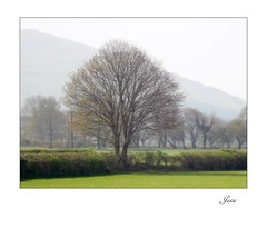 Study View. (jesse1dog) Tags: fathew tywyn landscape argus projectorlens bokah vintageprime hedge fence badgersett trialphoto focusing gm1 spring tree