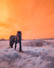 Tested a new infrared camera courtesy of kolari vision recently. Stunning results! Already loving this medium. (Scottnorrisfilm) Tags: mountain lansdscape morning sky hiking mist world wild walk sunset blue sun orange