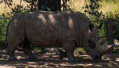 SafariWest-_DSC1535 (Vamsi K) Tags: california nature safari wildlife google santarosa ca usa