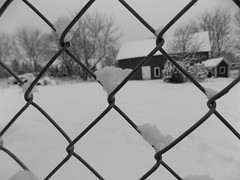 Backyard  through the fence (Pictures by Ann) Tags: backyard snow fence chainlinkfence chainlink redbarn barn hobbyshed playhouse