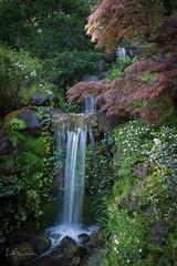 Three Falls (Lisa Roeder) Tags: hakonegardens japanesegarden waterfall nature landscape
