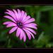 « Si la vie n'est qu'un passage, sur ce passage au moins semons des fleurs » : de Montaigne