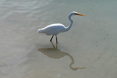 Water Bird (Patricia Woods) Tags: nikon z6 hervey bay beach fishermen memorial statue