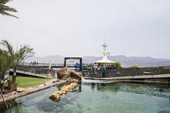 (Cindy en Israel) Tags: paisaje acuario estructura arquitectura puente personas gente agua verde rocas piedras montañas exterior eilat israel turismo viaje travel colores naturaleza