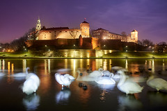 Krakow (silvia_mozzon) Tags: krakow castle wawel poland cracovia castello polonia europa europe travel travelphotography night laowa 15mm sony sonyalpha sonyalpha7 sonya7 manualfocus manuallens wide wideangle lungaesposizione longexposure ☯laquintaessenza☯ water river fiume swan cigni city cityscape landscapesseascapescityscapes landscape architecture architettura history cracow