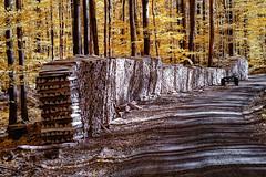 At right angles (Odenwald-Fotograf) Tags: infrared spring forestforest wald infrarot frühling hessen odenwald