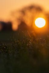 Sunrise (alexander_skaletz) Tags: nature sunrise gras details sunny macro macroworld sigma macrophotography sigmadeutschland nikon nikondeutschland mood spring warm village green orange bokeh new sunlight germany landscape landscapephotography