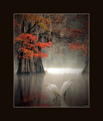 In Explore... Friends of the Bayou (portrait) (John's Love of Nature) Tags: davidthompson davidthompsonphotography greategret ardeaalba autumn morning fog mist misty baldcypress framed outdoor nature johnkelley johnsloveofnature wildlife wildlifeart dreamy