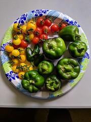 IMG_20190414_150046 (plazonys) Tags: harvest vegetables